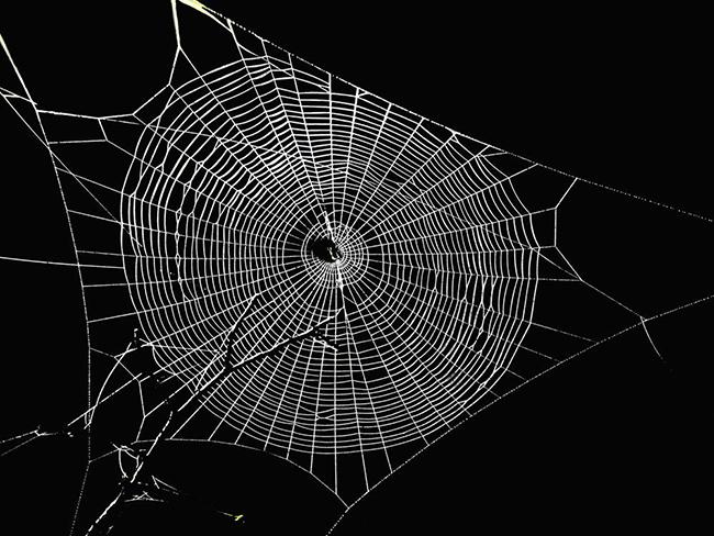 许多昆虫都能吐丝,为什么只有蚕吐的丝被人类用来做衣服?